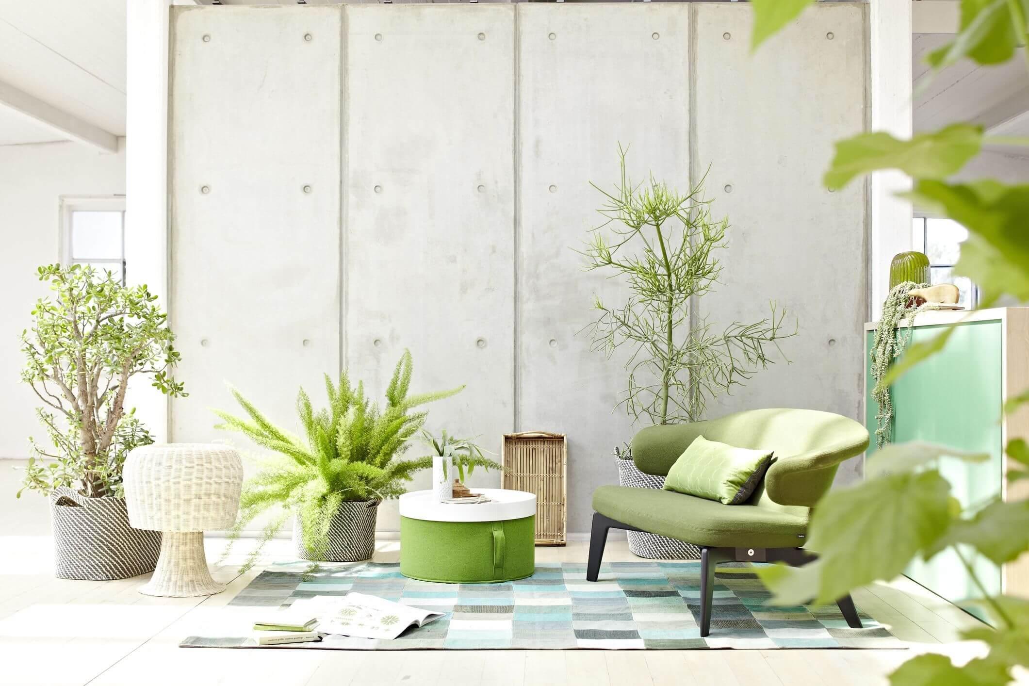 Geometric Green Wallpaper with Rattan Chair photo - 7