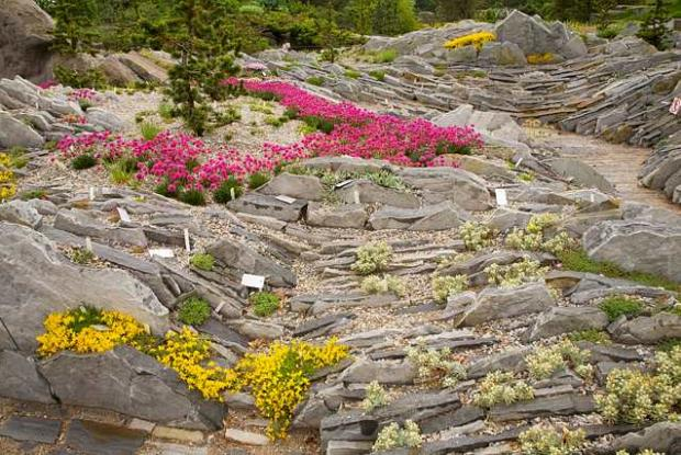 alpine plants for rock gardens photo - 2