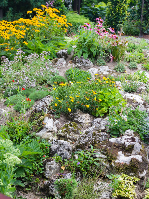 alpine plants for rock gardens photo - 3