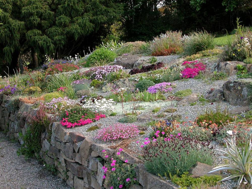 alpine plants for rock gardens photo - 4