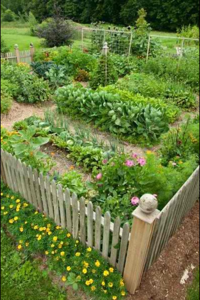 attractive vegetable garden fence photo - 1