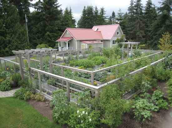 attractive vegetable garden fence photo - 6