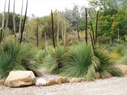 australian native plants for rock gardens photo - 10
