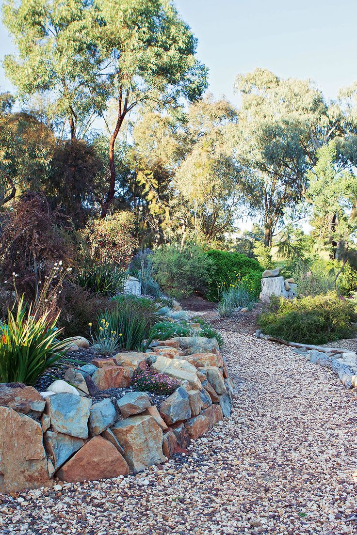 australian native plants for rock gardens photo - 2