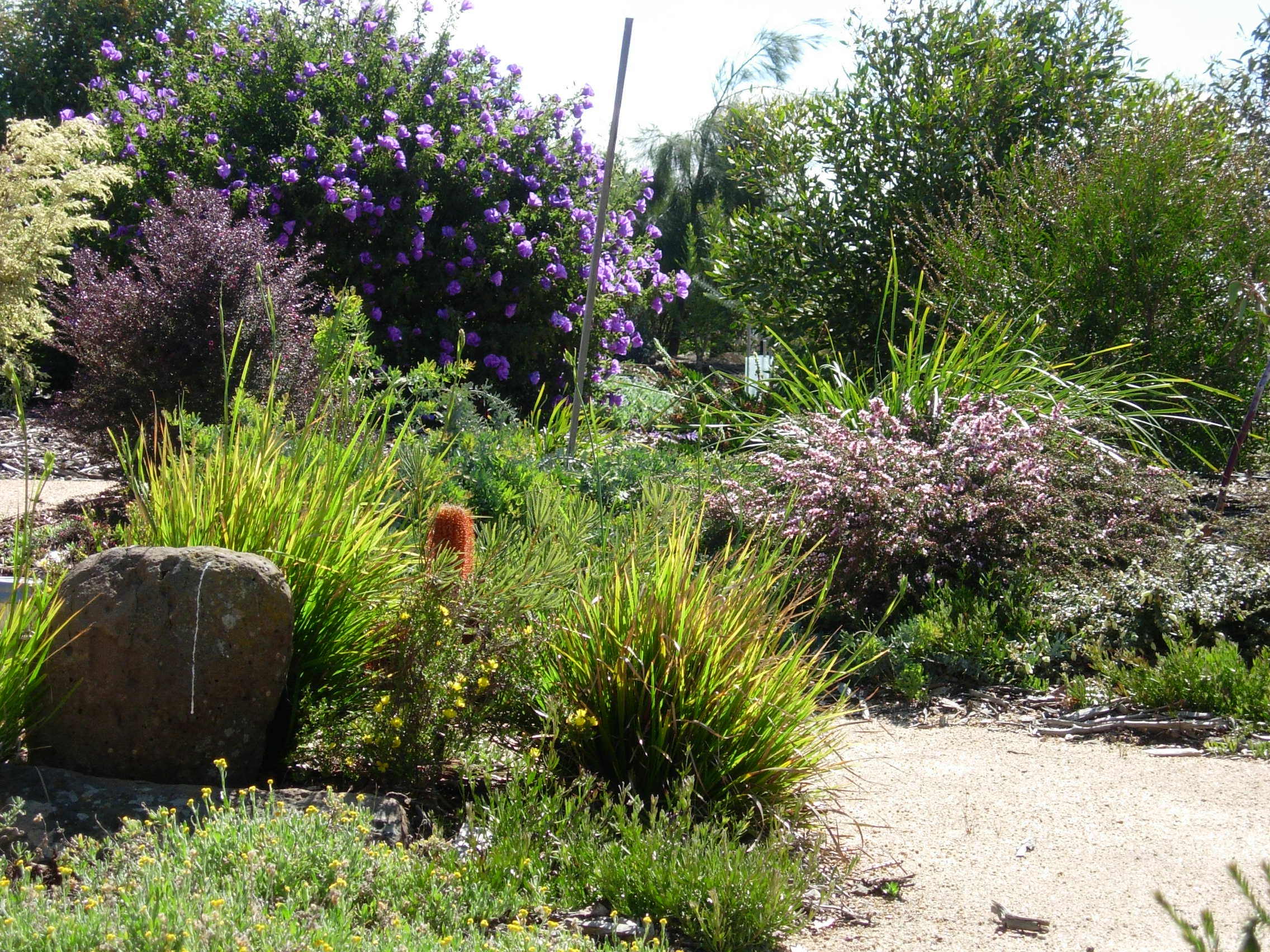 Australian Native Plants For Rock Gardens Photo   5