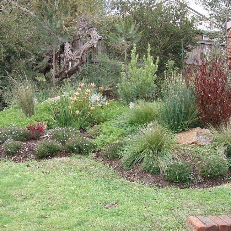 australian native plants for rock gardens photo - 6