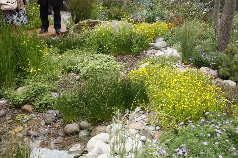 australian native plants for rock gardens photo - 8