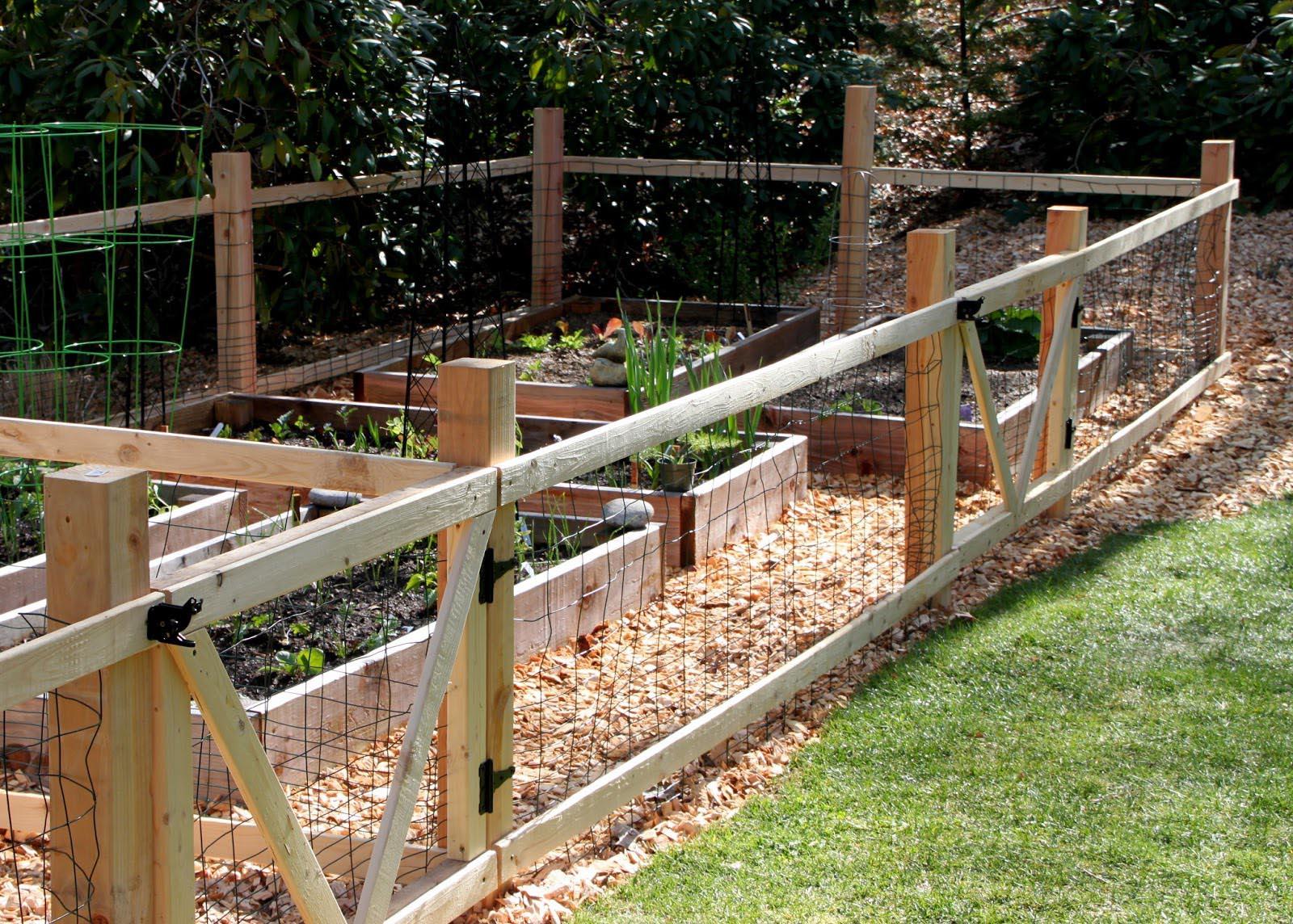 building a vegetable garden fence photo - 3