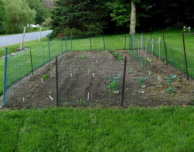 cheap vegetable garden fence photo - 2