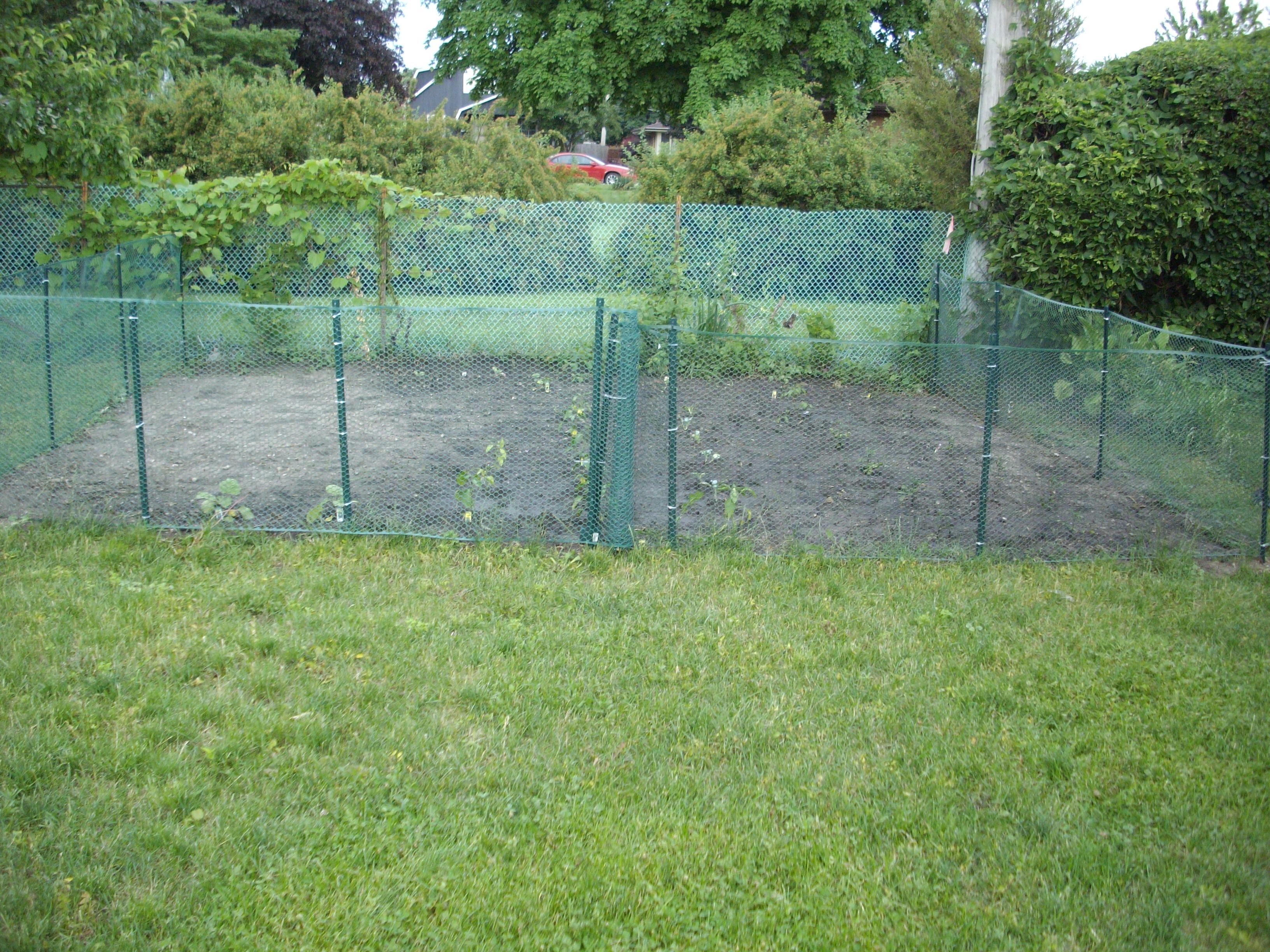cheap vegetable garden fence ideas photo - 1