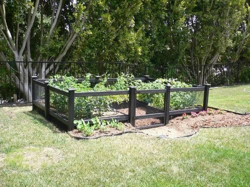 cheap vegetable garden fence ideas photo - 2