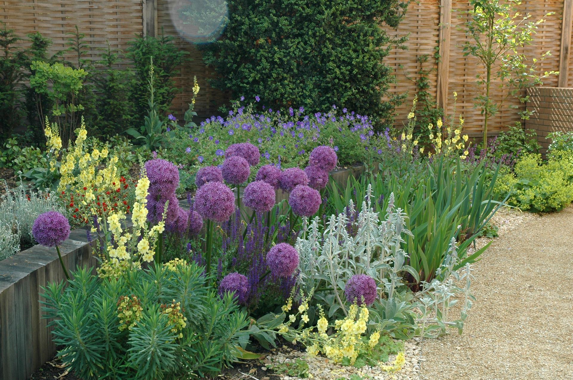contemporary garden plant ideas photo - 10