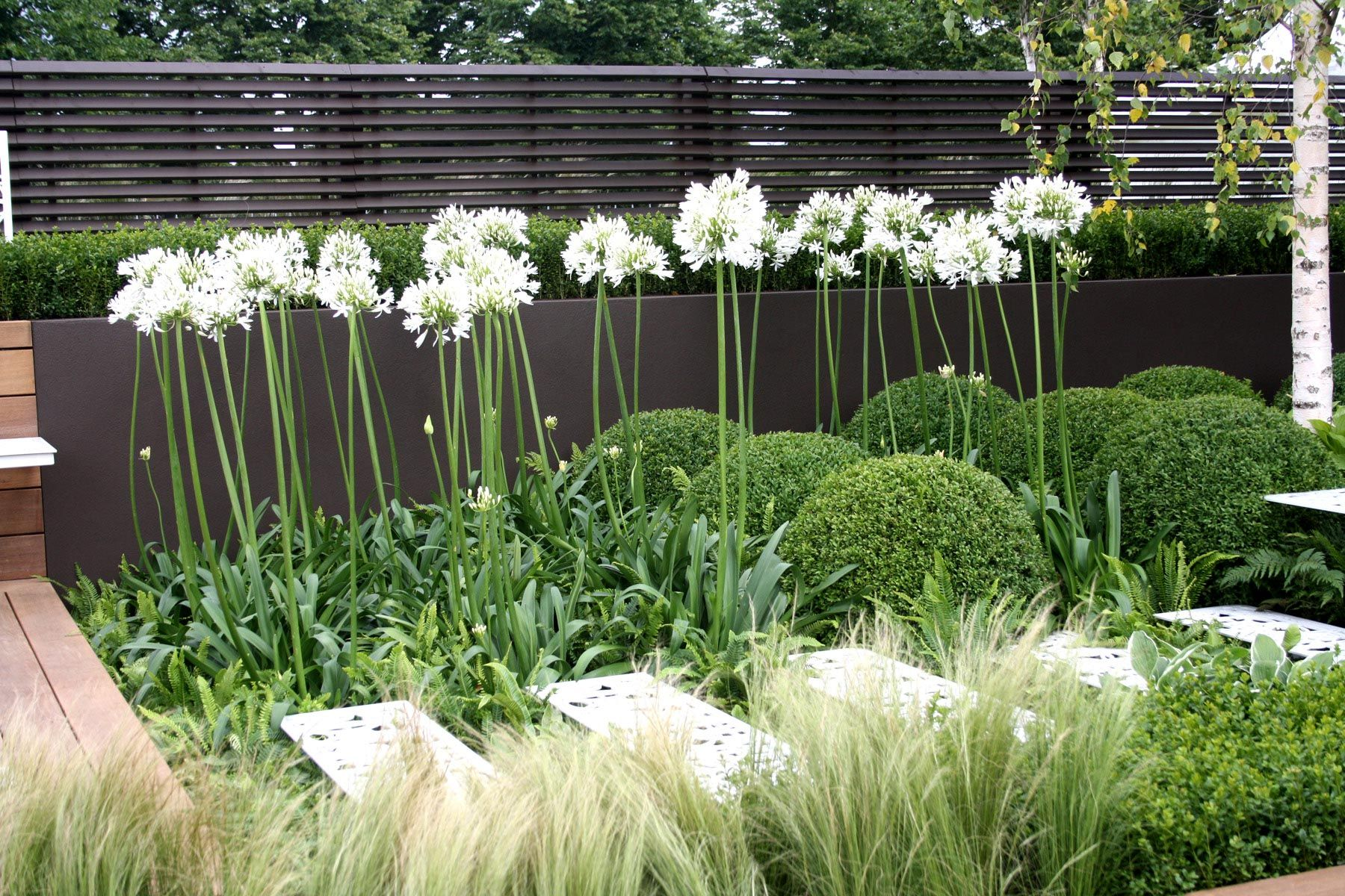 contemporary garden plant ideas photo - 4