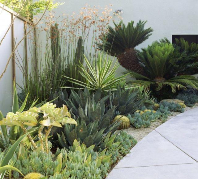 contemporary garden plant ideas photo - 6
