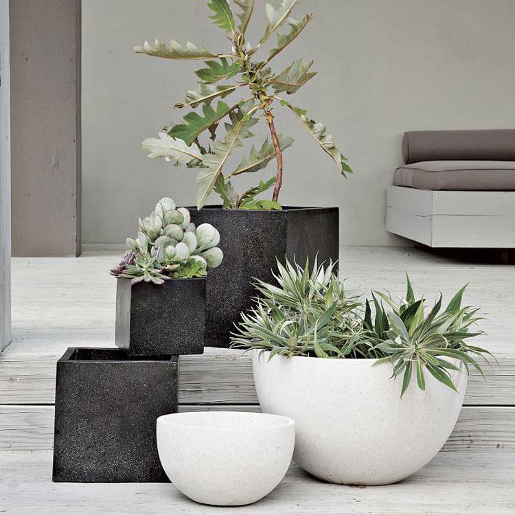 contemporary garden plant ideas photo - 8
