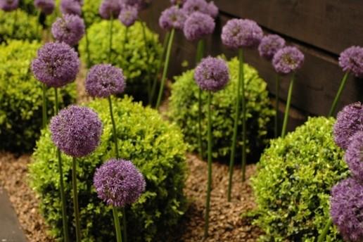 contemporary garden plant ideas photo - 9