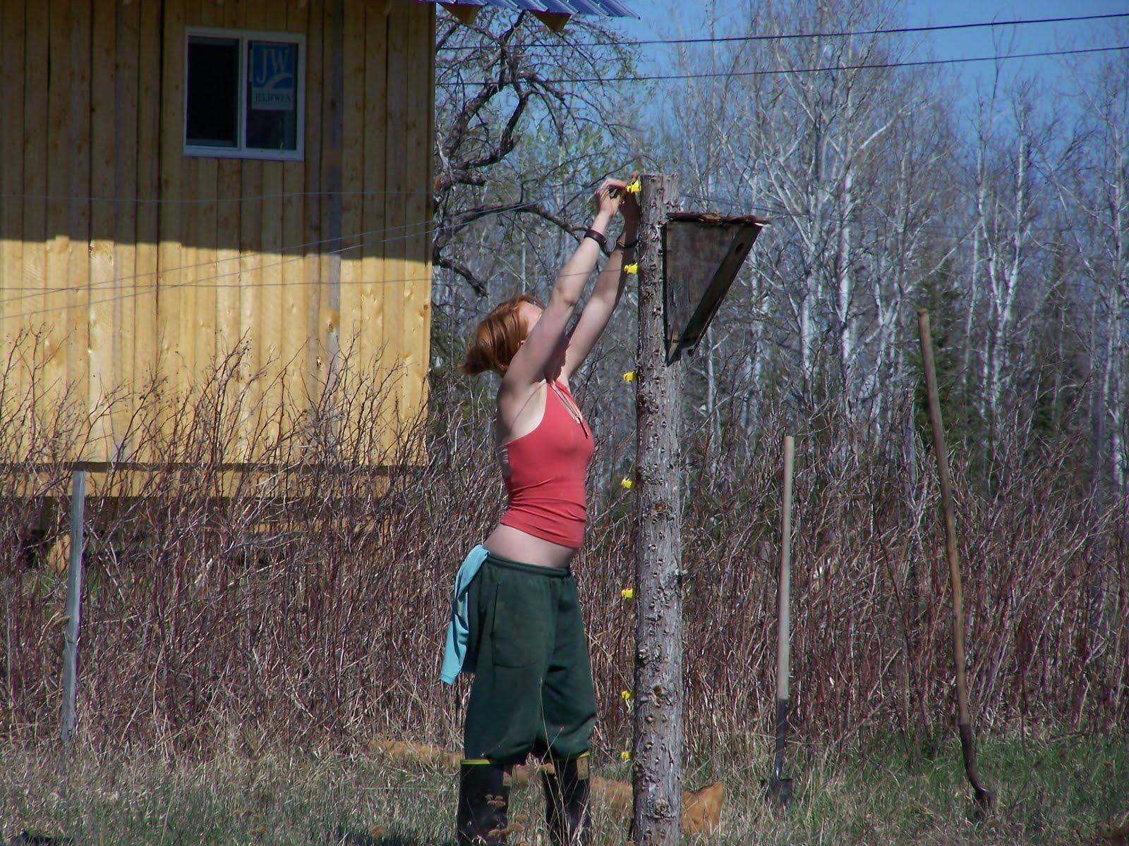 Deer Fence Design Ideas Hawk Haven