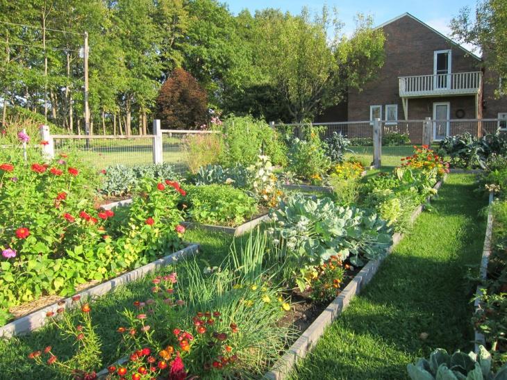 designing an urban vegetable garden photo - 1