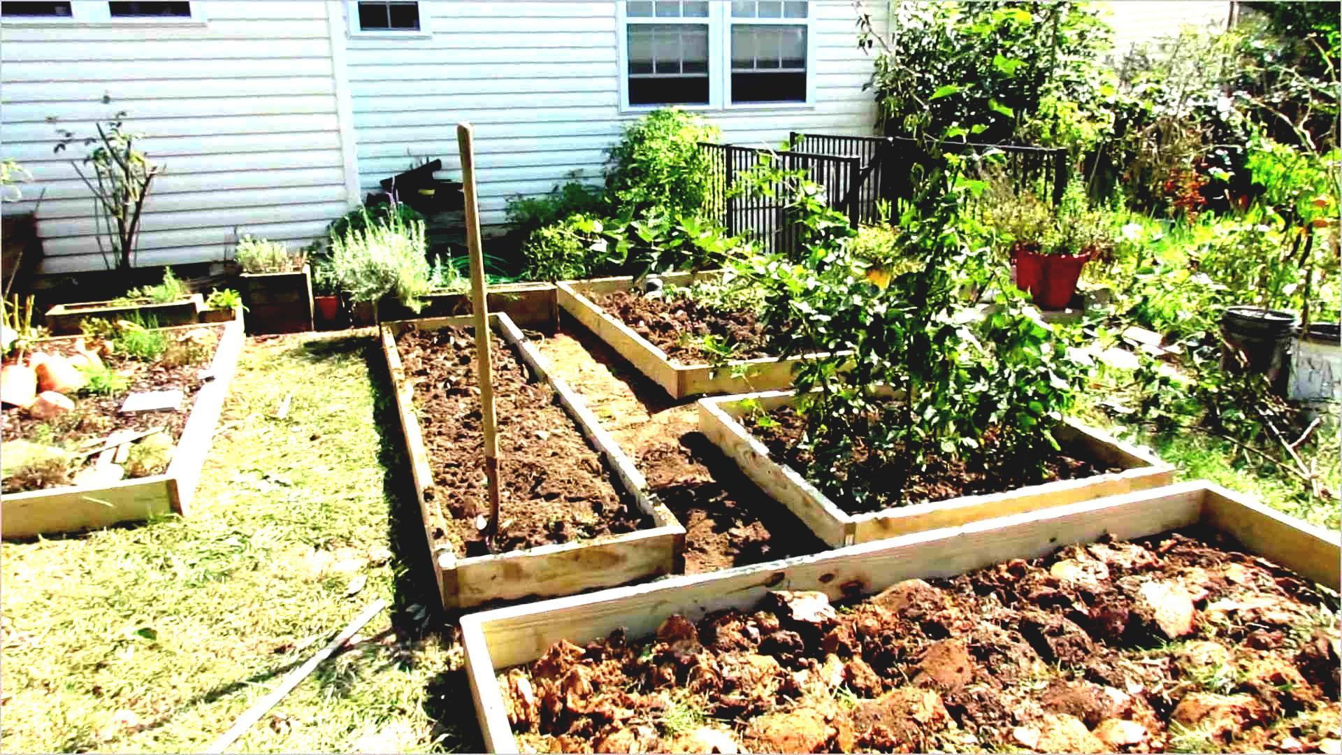 designing an urban vegetable garden photo - 10