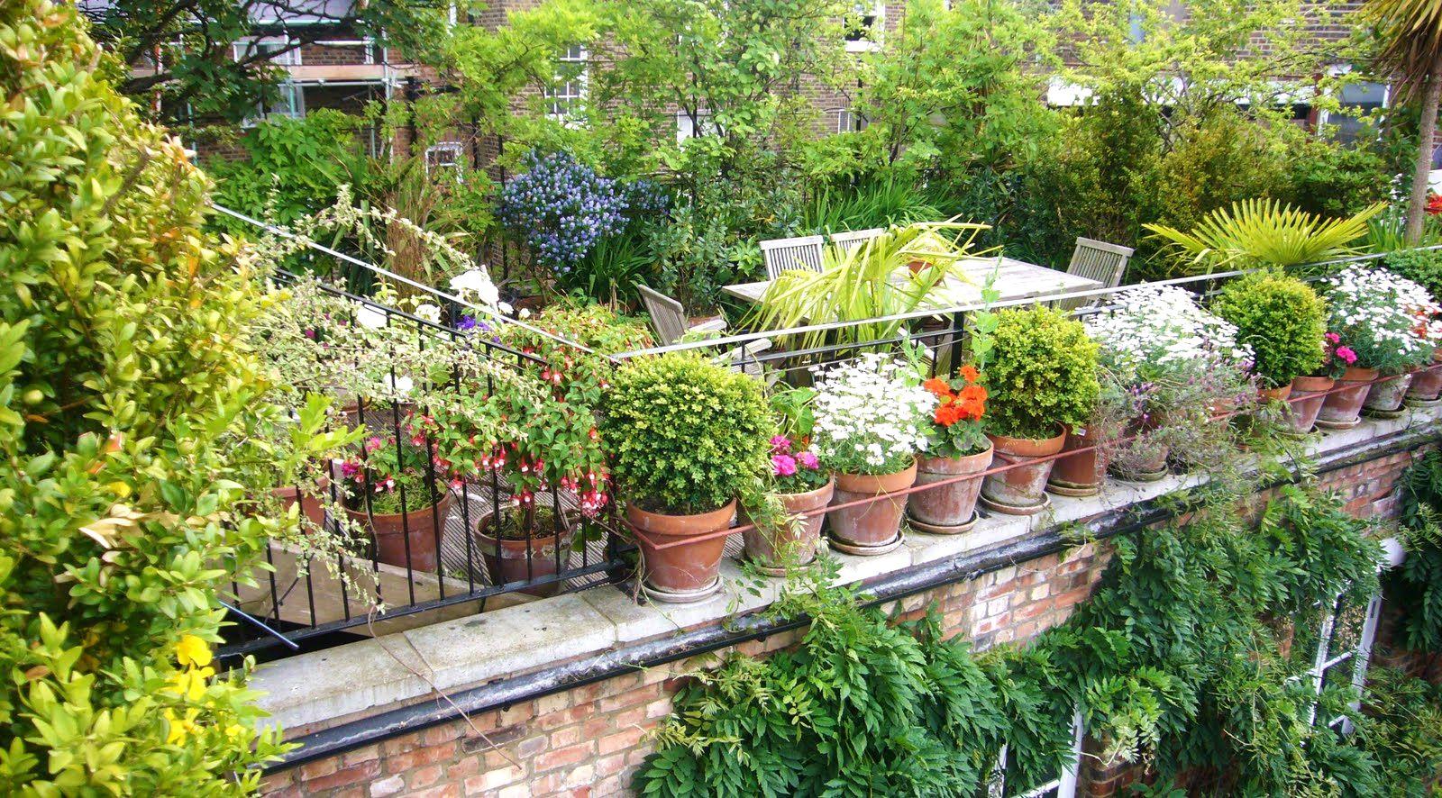 designing an urban vegetable garden photo - 2