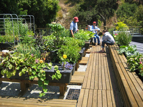 designing an urban vegetable garden photo - 8