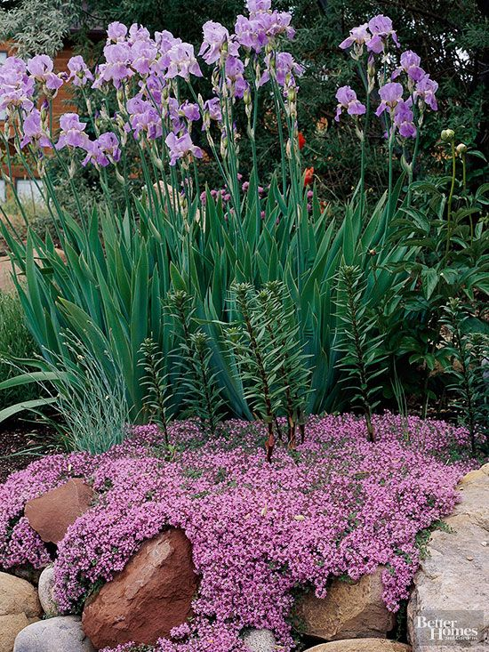 flowers and plants for rock gardens photo - 10