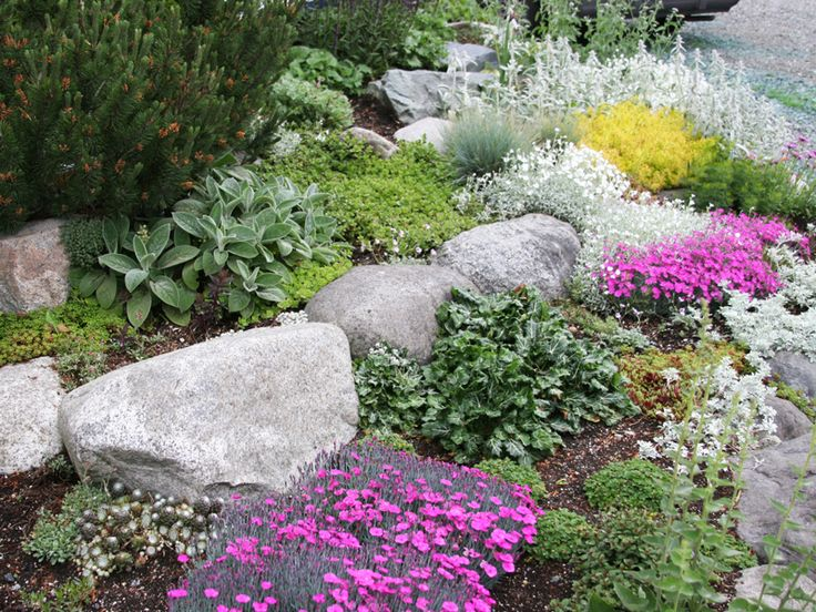 flowers and plants for rock gardens photo - 7