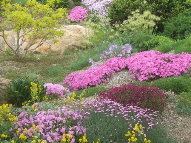 flowers and plants for rock gardens photo - 8