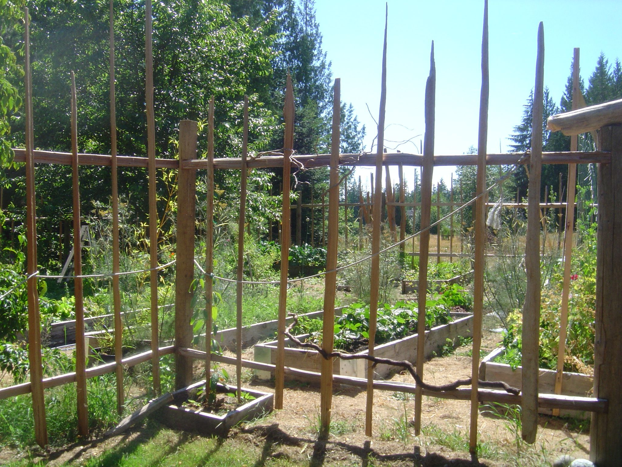 garden deer fencing ideas photo - 10