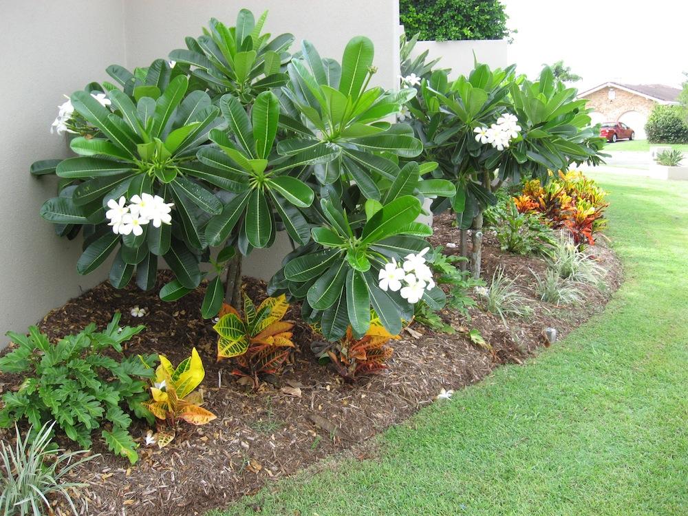 garden design ideas gold coast photo - 2