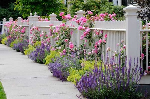 garden design ideas lavender photo - 1
