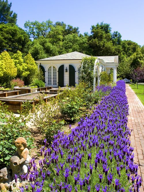 garden design ideas lavender photo - 4