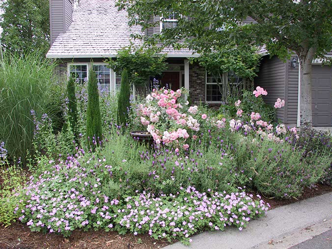 garden design ideas lavender photo - 5