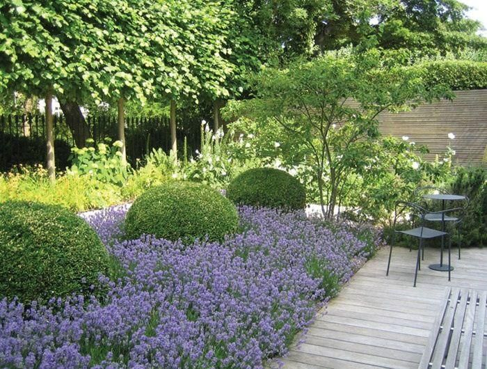 garden design ideas lavender photo - 8