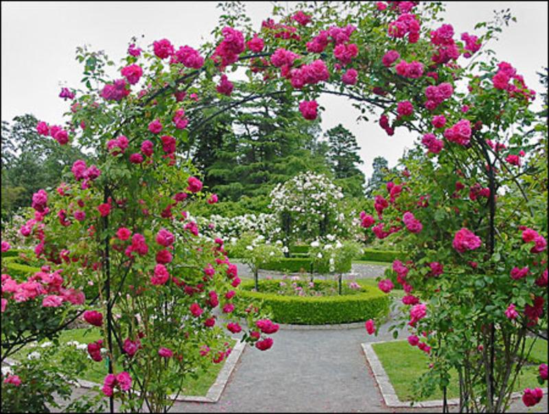 garden design ideas roses photo - 1