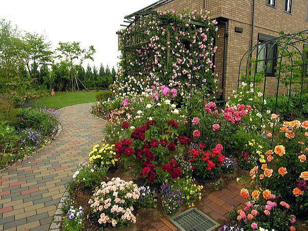 garden design ideas roses photo - 10