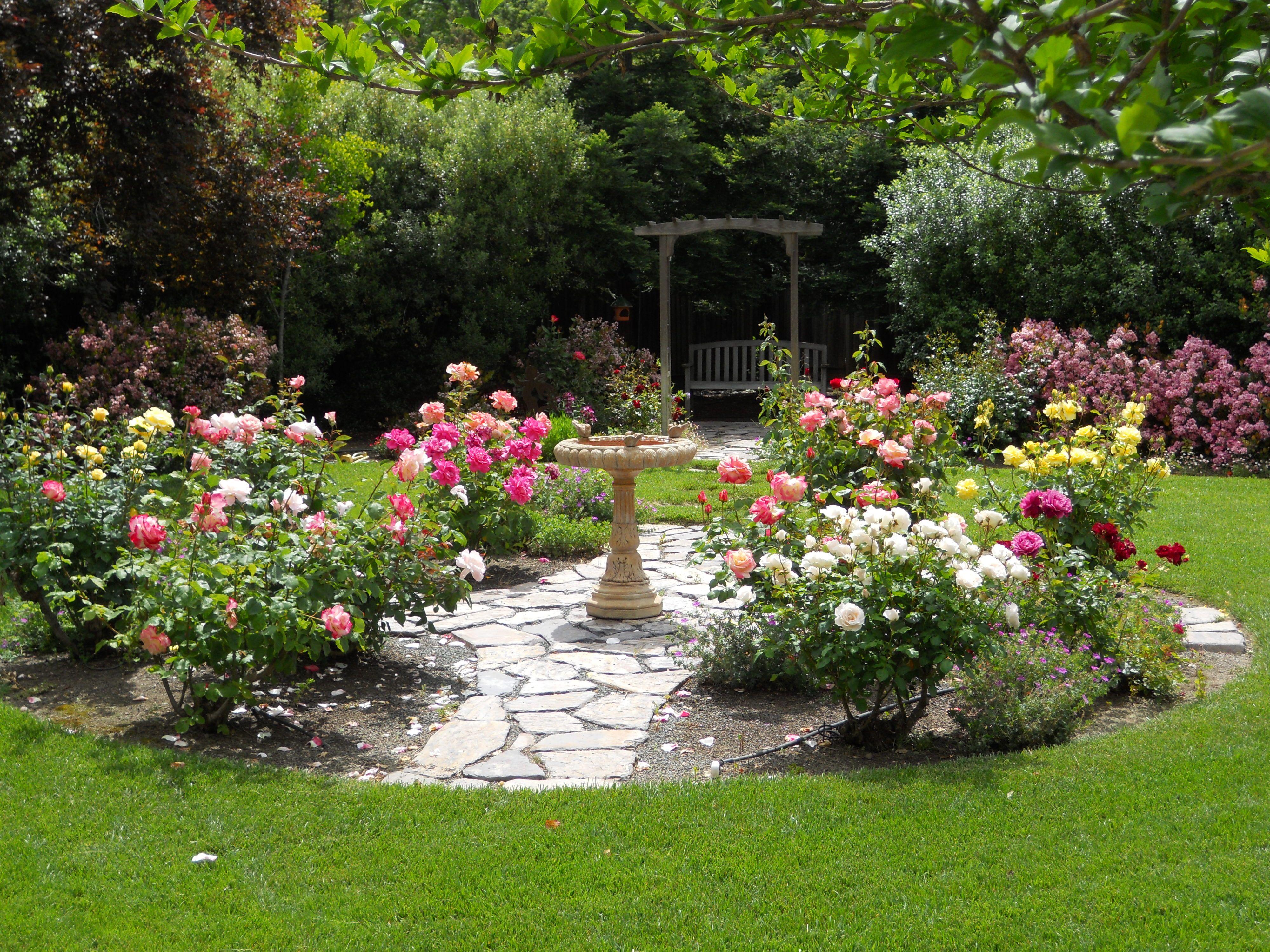 garden design ideas roses photo - 4