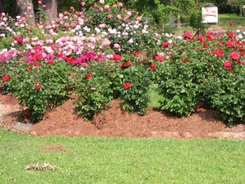 garden design ideas roses photo - 5