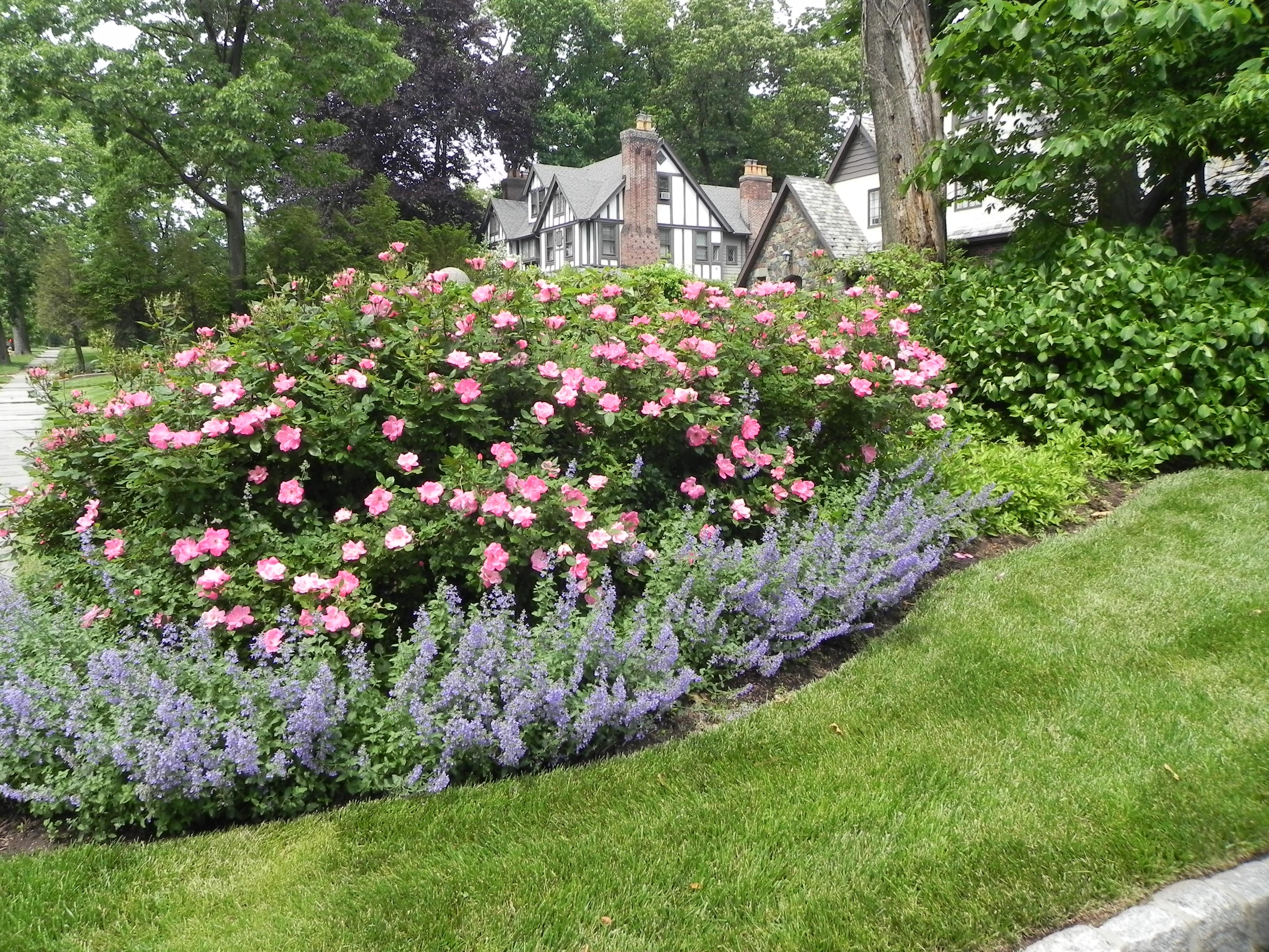 garden design ideas roses photo - 6