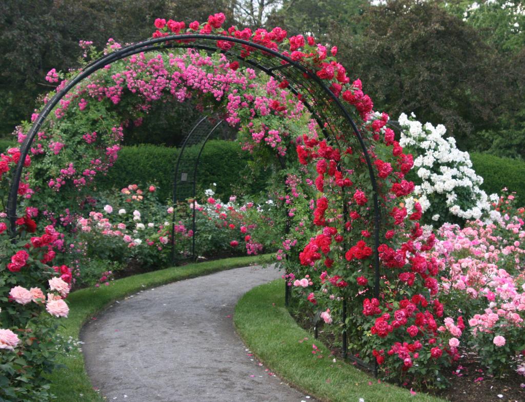 garden design ideas roses photo - 9