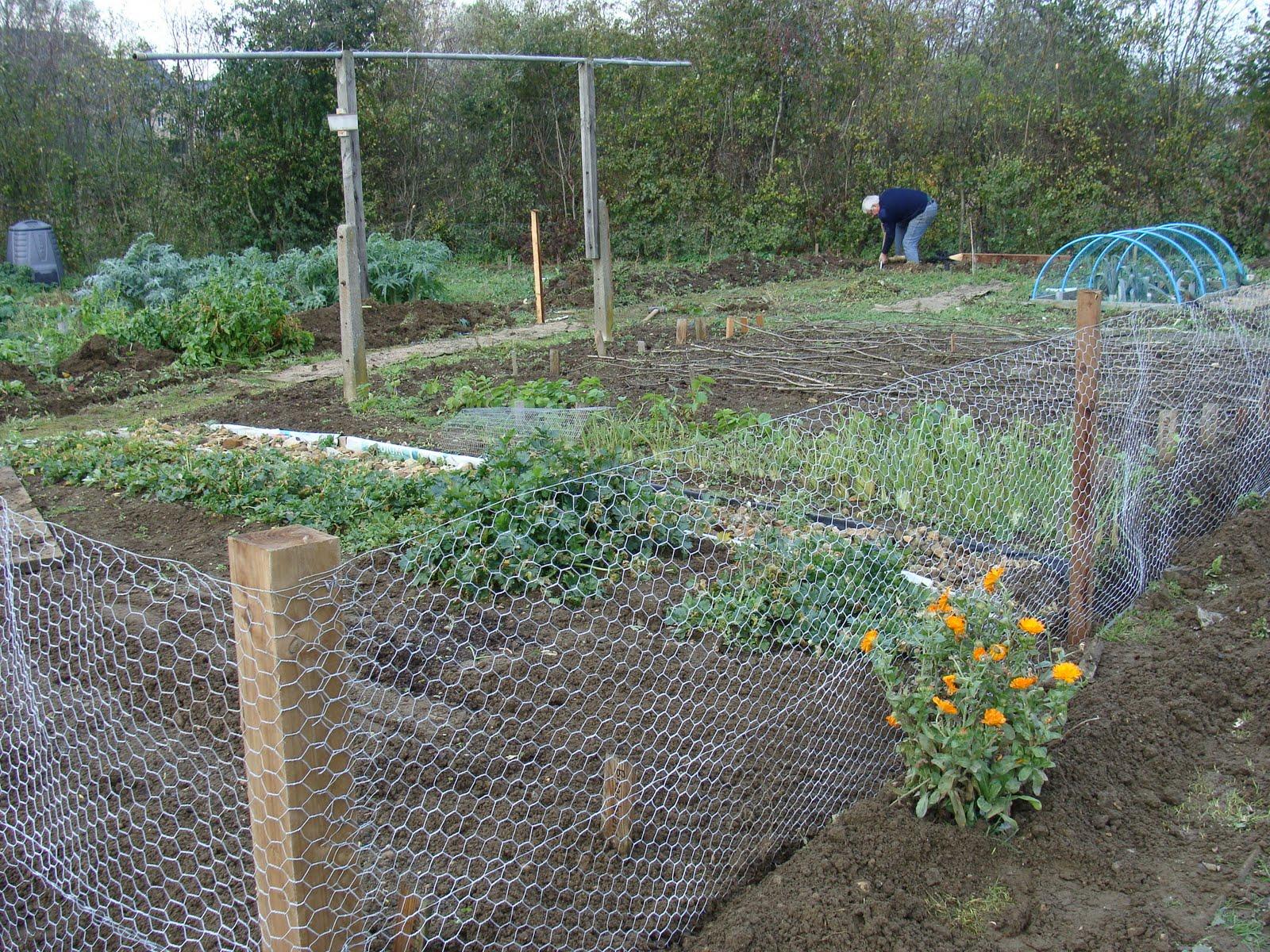 garden fence ideas for rabbits photo - 1