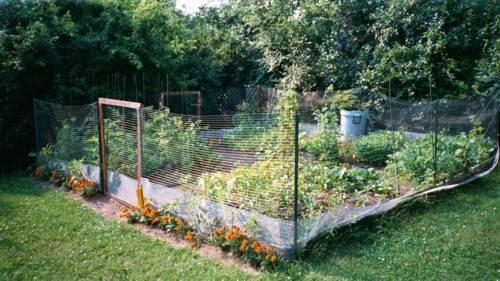 garden fence ideas for rabbits photo - 10