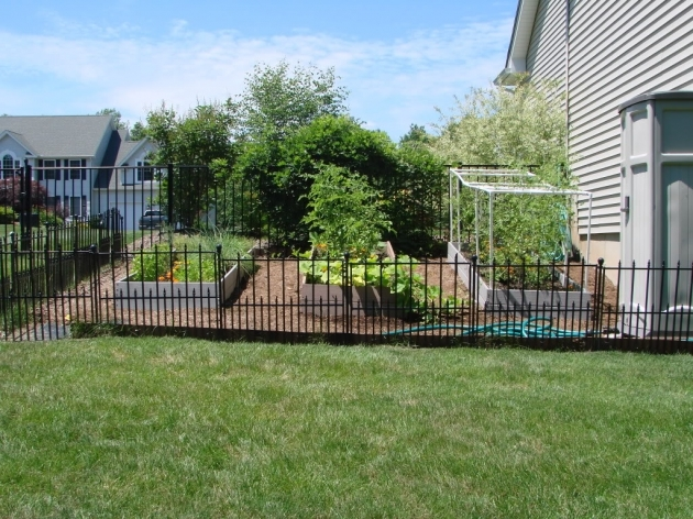garden fencing ideas for dogs photo - 4