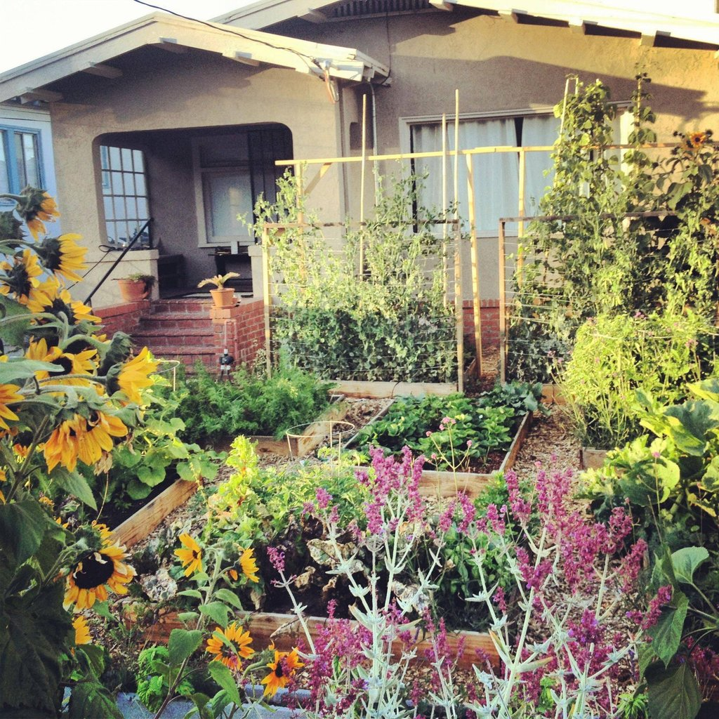 growing an urban vegetable garden photo - 10