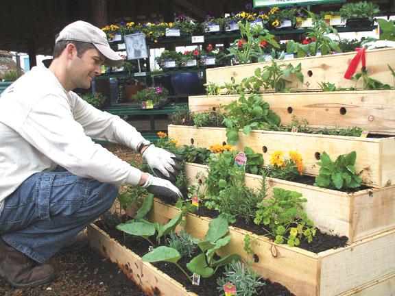 growing an urban vegetable garden photo - 2