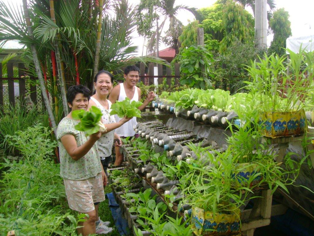 growing an urban vegetable garden photo - 3