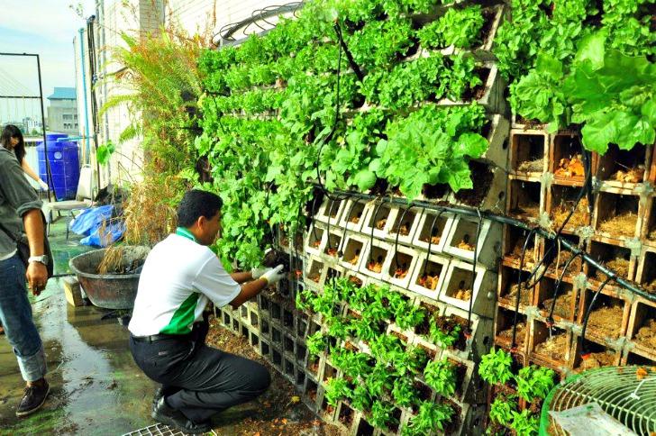 growing an urban vegetable garden photo - 4