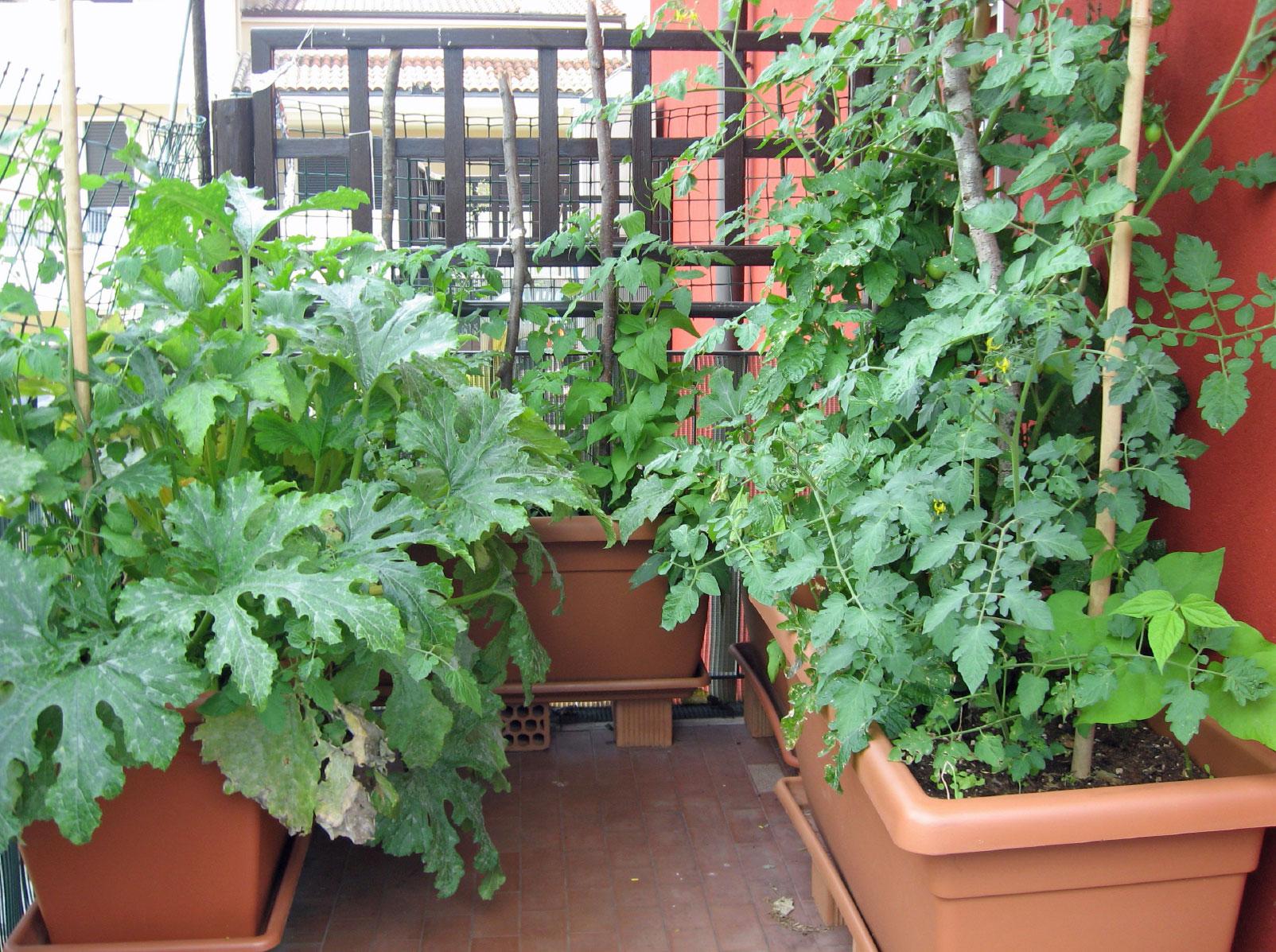 growing an urban vegetable garden photo - 5