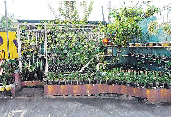 growing an urban vegetable garden photo - 6