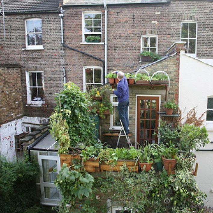growing an urban vegetable garden photo - 9
